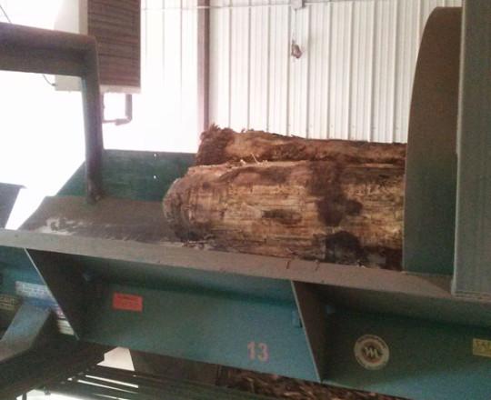 Logs exiting debarker.