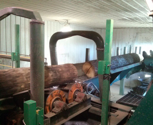 Logs on debarker conveyor