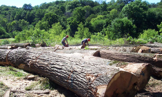 Loggers trimming up logs