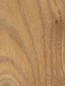 red-elm (1)